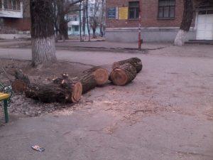 Прокуратура опротестовала правила благоустройства Новочеркасска