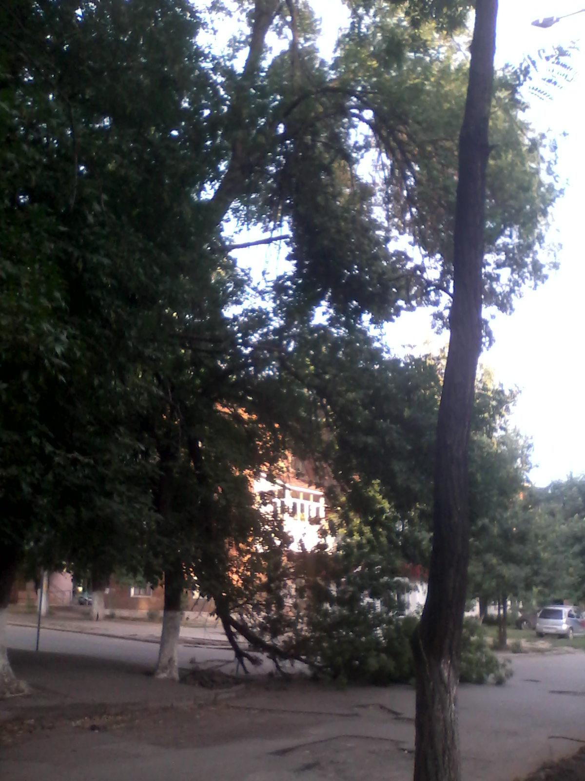 дерево гвард (1)