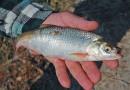Под Новочеркасском поймали рыболова-браконьера