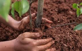 В Новочеркасске посадят новые деревья
