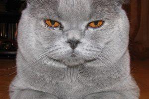 На сайте областного главка свой блог ведет кот