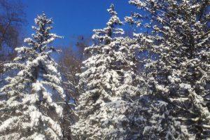 Новочеркасские власти рапортовали об устранении последствий снегопада
