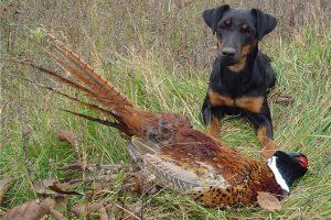 Охотничий сезон в Новочеркасске открылся не для всех